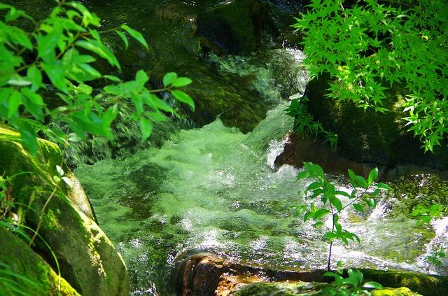 自然のゆらぎのある景色の画像