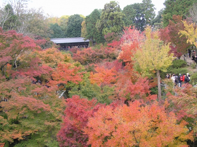 紅葉が美しい東福寺の画像
