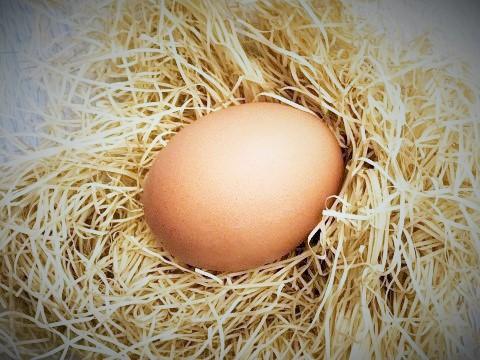 にわとりの卵の画像