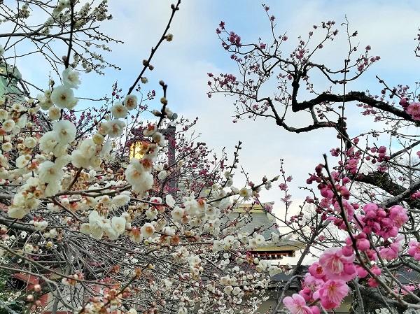寒さのきびしい冬に花開く梅は、強さと美しさのシンボル。