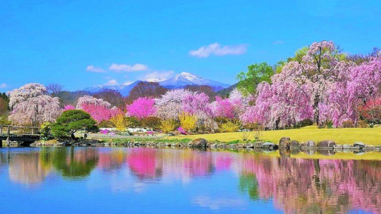 清らかな春の景色の画像