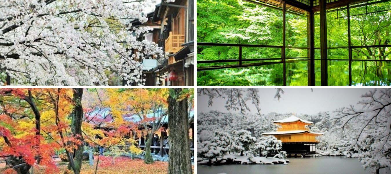四季の花の画像