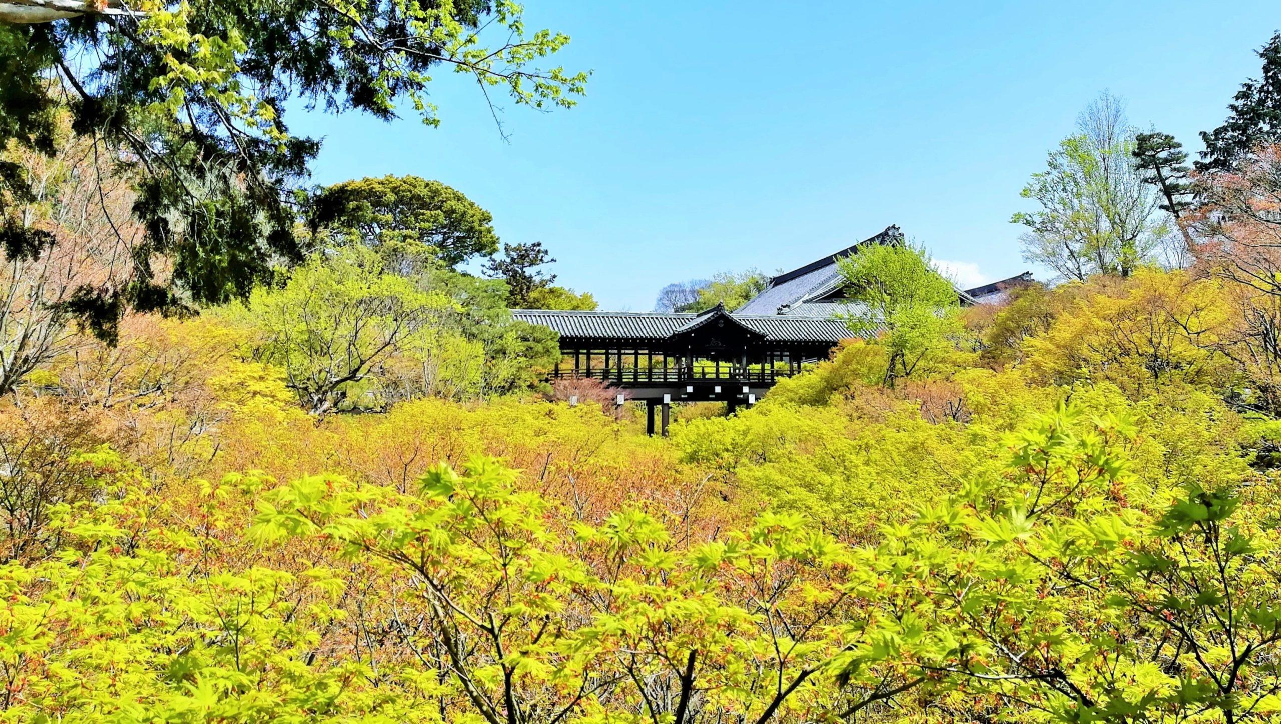 京都東福寺の青楓の画像